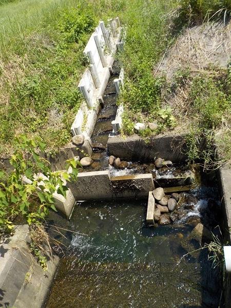 用水の魚道