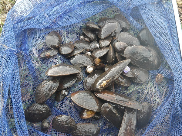 当日の貝全種