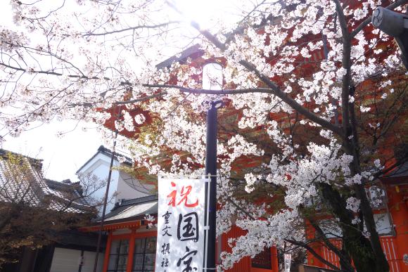 2021桜-04