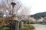 春の円山公園2021-10