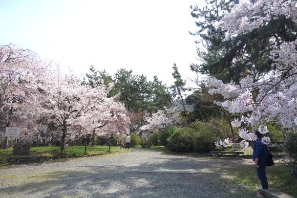 春の円山公園2021-02