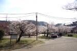 春の円山公園2021-03
