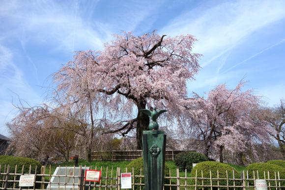 春の円山公園2021-06