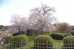 春の円山公園2021-07