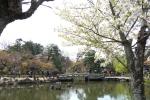 春の円山公園2021-08
