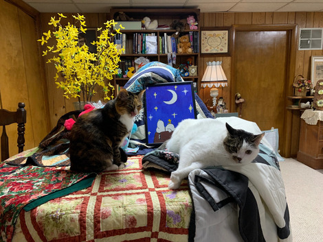 1-19-21-snow-and-cats-006