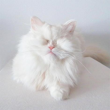 Screenshot_2020-07-03-Moet-the-Blind-Cat(-moetblindcat)-•-Instagram写真と動画