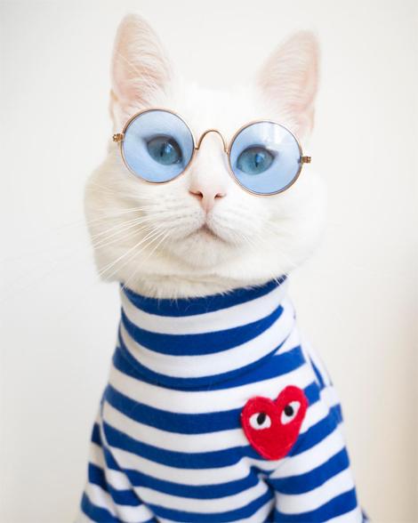 Screenshot_2020-07-10-Zappa-The-Cat(-zappa_the_cat)-•-Instagram写真と動画