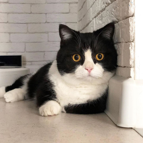 Screenshot_2020-08-14 Manchester Cat ( cat_manchester)のInstagramプロフィール • 779件の投稿