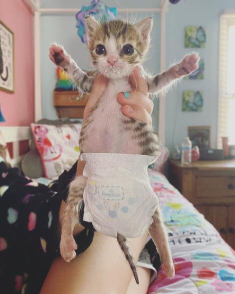 Screenshot_2020-08-17 Perfectly Imperfect Kittens( triumphant_teagan) • Instagram写真と動画