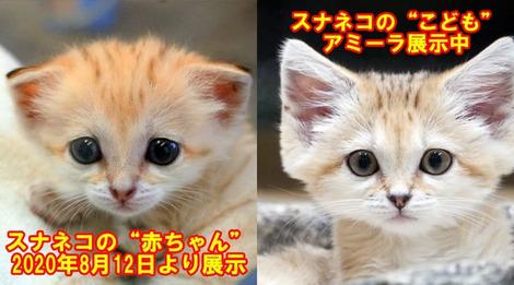 Screenshot_2020-08-23 nasu_animal_kingdomはInstagramを利用しています • フォロワー30 8千人