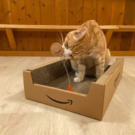 Screenshot_2020-08-30 Amazon co jp: [Amazon限定ブランド] Petzone 爪とぎ Amazonボックス つめみがき 猫用 ペット用品(1)