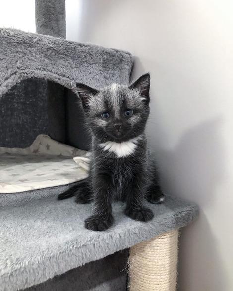 Screenshot_2020-09-21 Tiny but Mighty Kitten Rescue( tinybutmightykittenrescue) • Instagram写真と動画