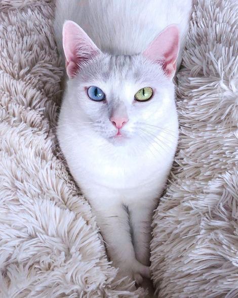 Screenshot_2020-09-25 Sansa the Polydactyl Cat( sansa thecat) • Instagram写真と動画