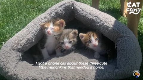 StrayCatAnnie+Kittens4