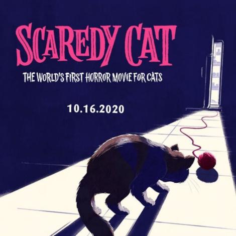 Screenshot_2020-10-30 Scaredy Cat The Movie( temptationscats) • Instagram写真と動画