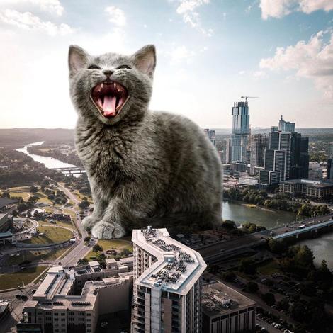 Screenshot_2021-02-08 Matt McCarthy Cat Collage( mrmattmccarthy) • Instagram写真と動画