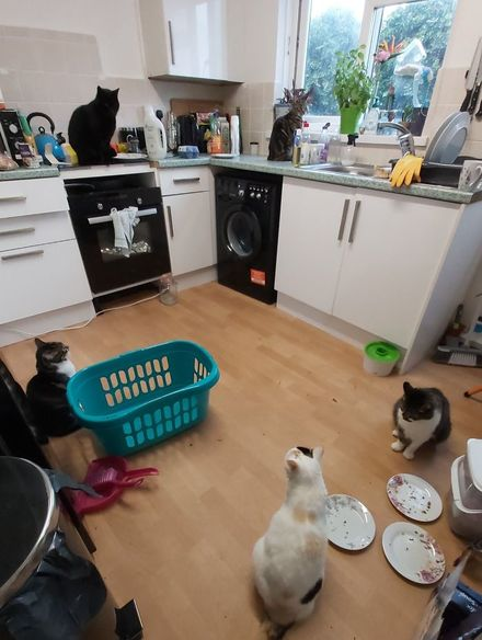 4_people-find-stranger-cats-in-their-houses-1-5efc765c43146__700
