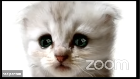 KittenZoomFilterMishap1