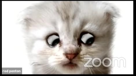 KittenZoomFilterMishap2