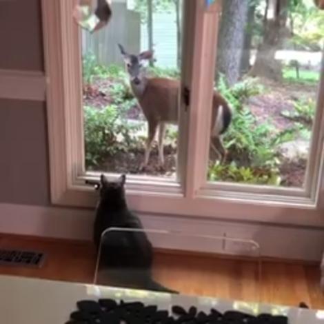 Vancethecat+deer1