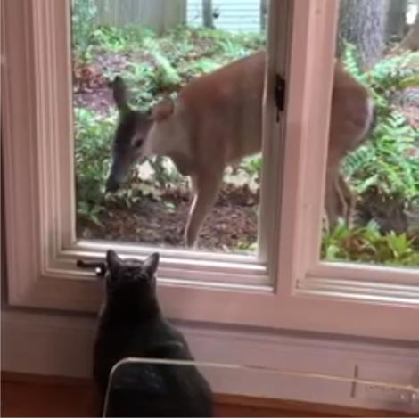 Vancethecat+deer2