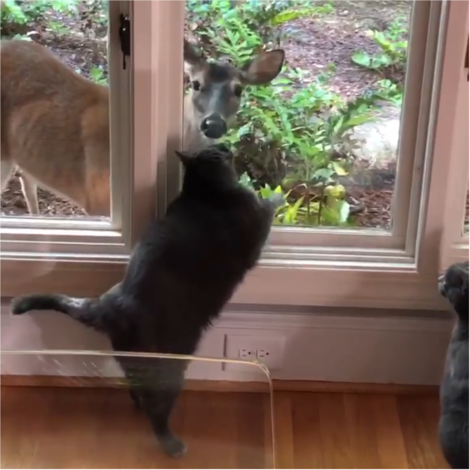 Vancethecat+deer7