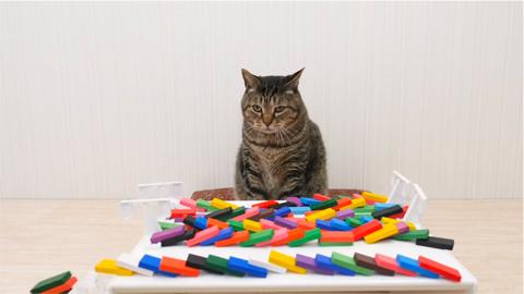 cat_navi_desk_catanddomino_1
