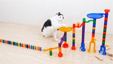 cat_navi_desk_catanddomino_2