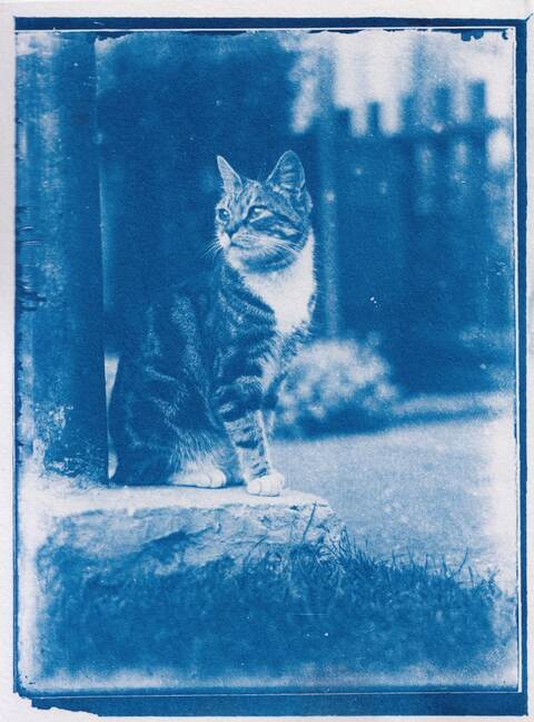 cyanotype-cat-photos-01