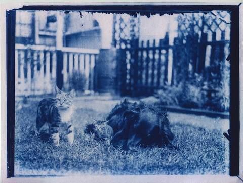 cyanotype-cat-photos-02