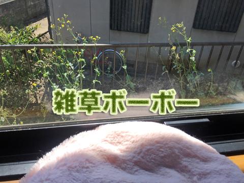garden_053020