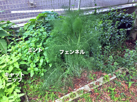 herb2_052420