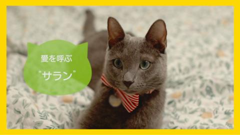 hmc_3972_cat1