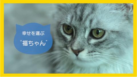 hmc_3972_cat2