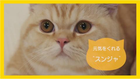 hmc_3972_cat4