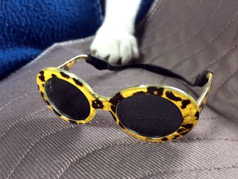 pet-sunglasses_062220