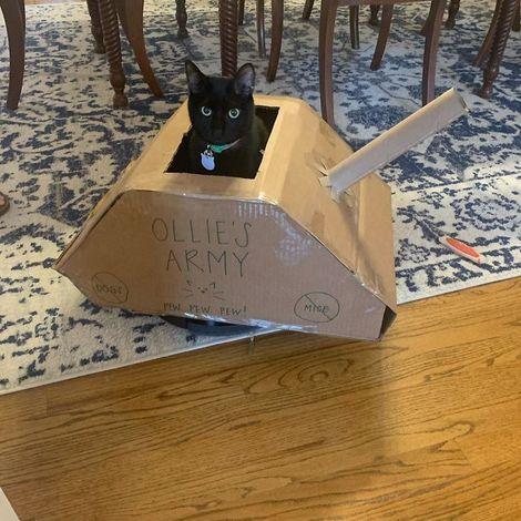 quarantined-owners-build-cardboard-cat-tanks-5eaa749b5589a__700