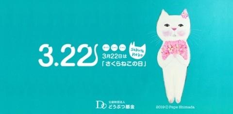 sakuranekonohi_032220_main