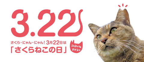 sakuranekonohi_032220_sub1