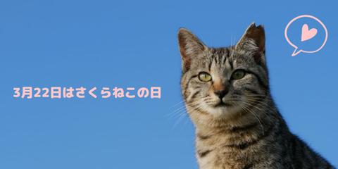 sakuranekonohi_032220_sub