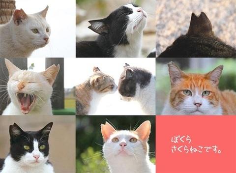 sakuranekonohi_032220_sub5