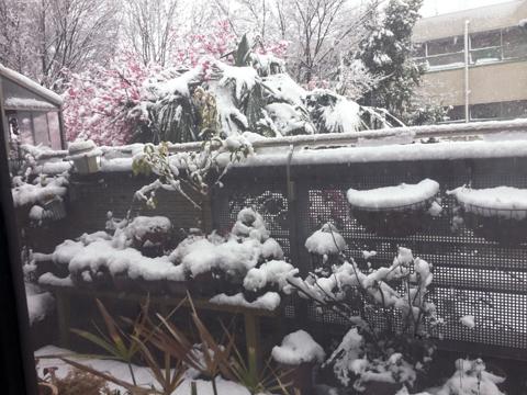 snow1_032920