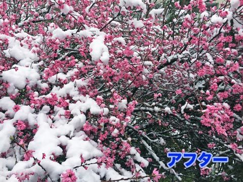 snow5_032920