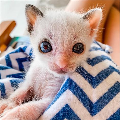 the_kitten_guinness_042620
