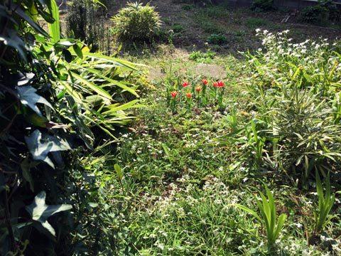 tulip_040520