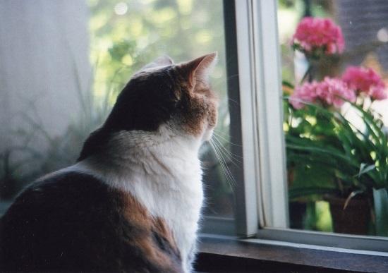 窓の外を眺める