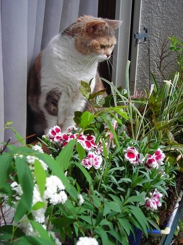 窓から庭を眺める