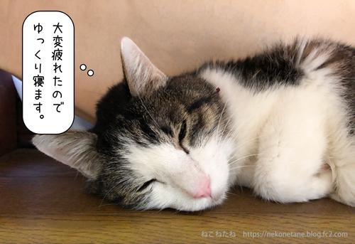 大変疲れたので寝ます。