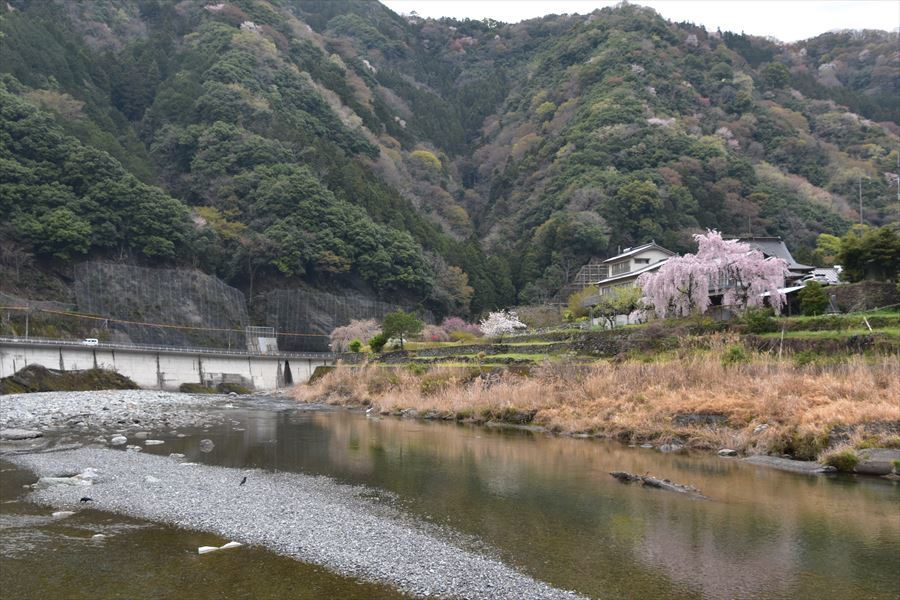 潜水橋と桜4